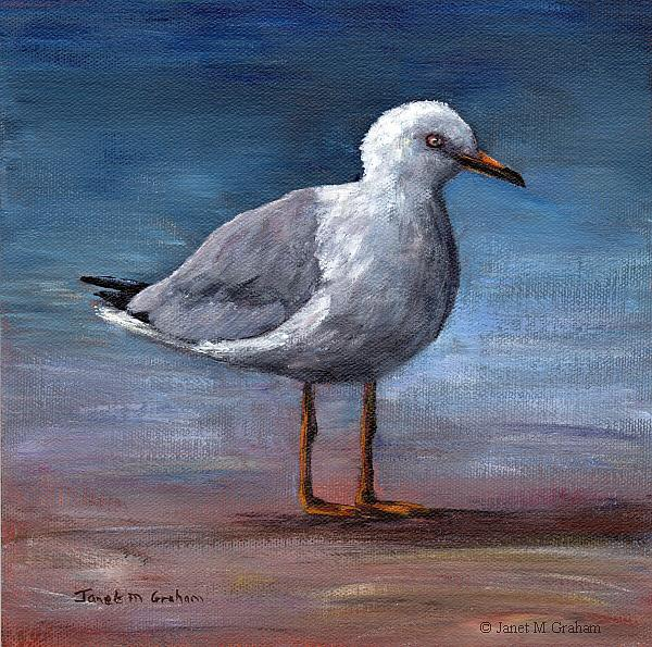 Art: Seagull by Artist Janet M Graham