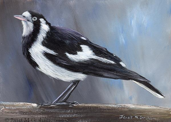 Art: Magpie Lark (Peewee) by Artist Janet M Graham