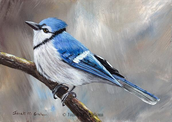 Art: Blue Jay No 4 by Artist Janet M Graham