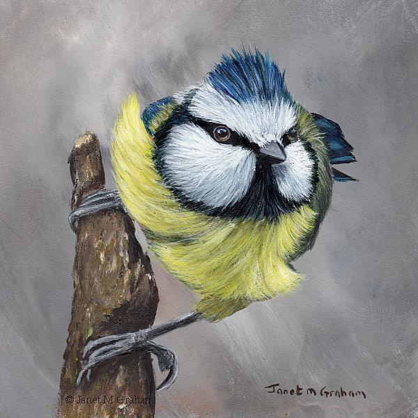 Art: Blue Tit No 9 by Artist Janet M Graham