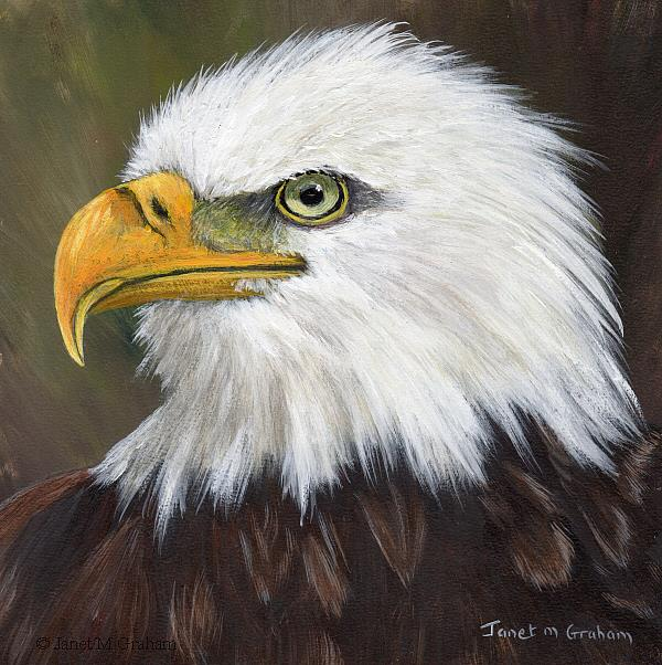 Art: Bald Eagle by Artist Janet M Graham