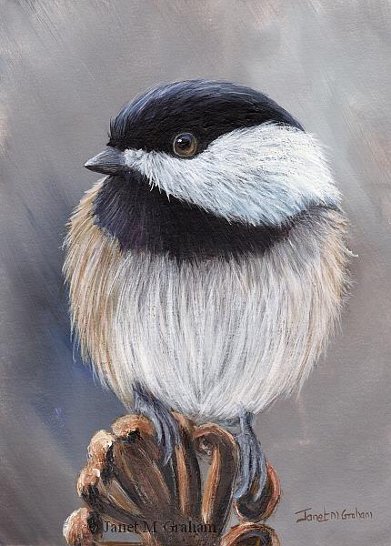 Art: Black Capped Chickadee No 11 by Artist Janet M Graham