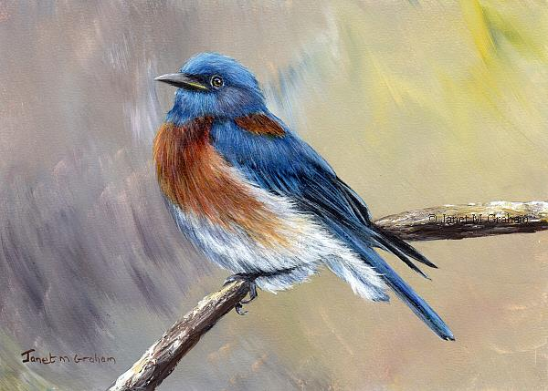 Art: Western Bluebird No 2 by Artist Janet M Graham