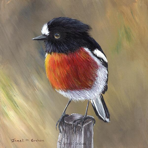 Art: Scarlet Robin No 9 by Artist Janet M Graham