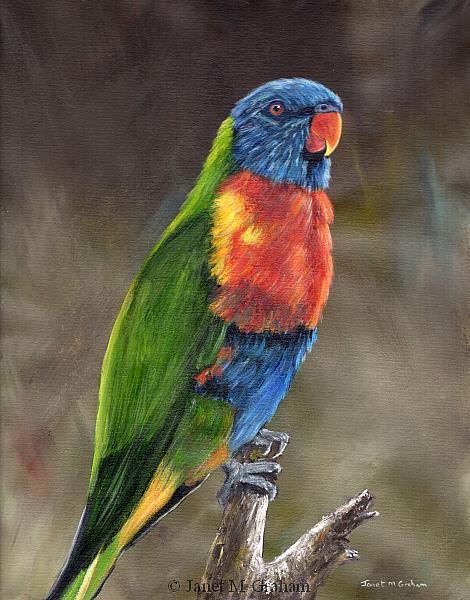 Art: Rainbow Lorikeet by Artist Janet M Graham