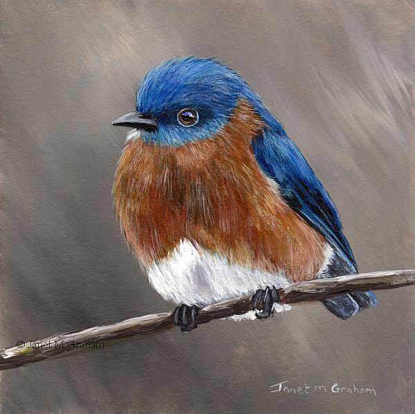 Art: Eastern Bluebird No 4 by Artist Janet M Graham