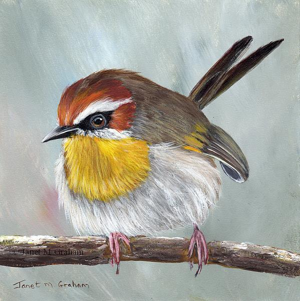 Art: Rufous Capped Warbler No 7 by Artist Janet M Graham
