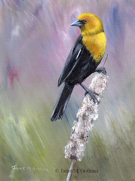 Art: Yellow Headed Blackbird by Artist Janet M Graham