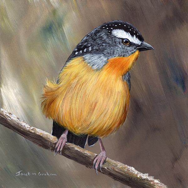 Art: Spotted Pardalote No 5 by Artist Janet M Graham