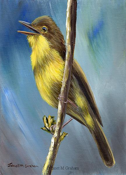 Art: Melodious Warbler by Artist Janet M Graham