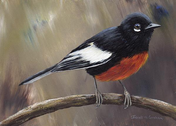 Art: Painted Redstart No 3 by Artist Janet M Graham