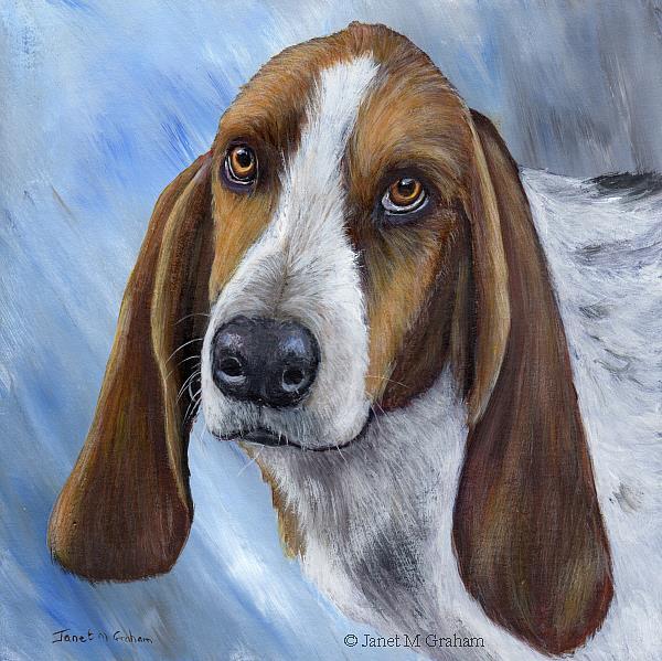 Art: Basset Hound by Artist Janet M Graham