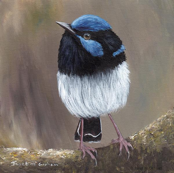 Art: Superb Fairy Wren No 21 by Artist Janet M Graham