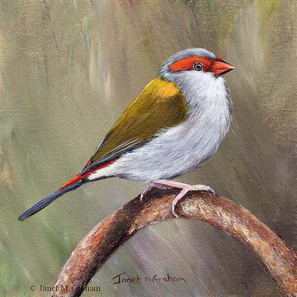 Art: Red Browed Finch No 4 by Artist Janet M Graham