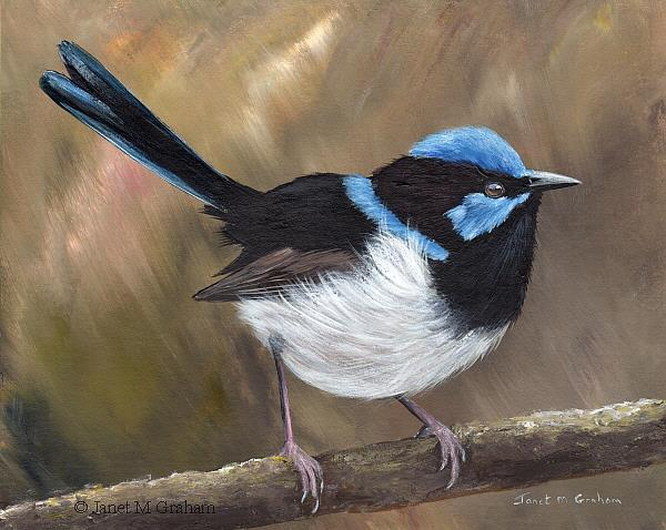 Art: Superb Fairy Wren No 22 by Artist Janet M Graham