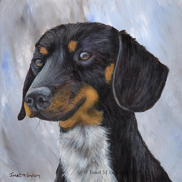 Art: Dachshund by Artist Janet M Graham