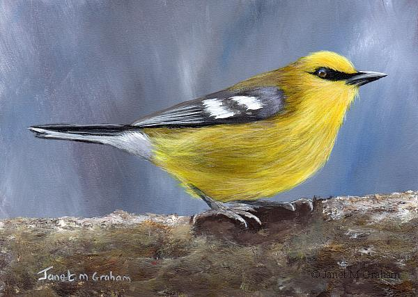 Art: Blue Winged Warbler by Artist Janet M Graham