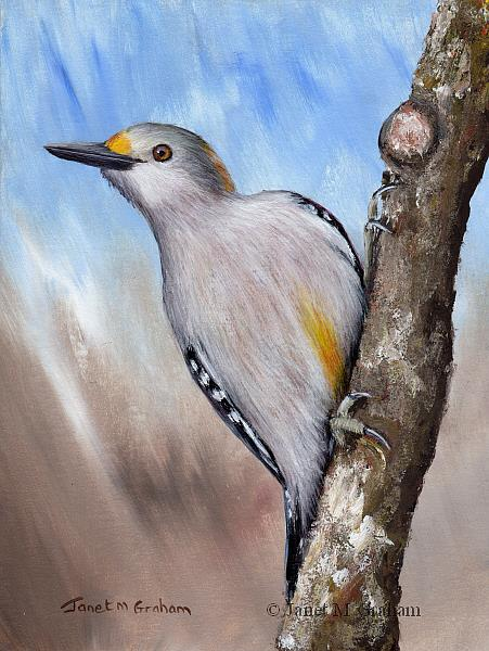Art: Golden Fronted Woodpecker by Artist Janet M Graham