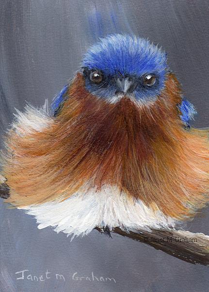 Art: Eastern Bluebird ACEO by Artist Janet M Graham