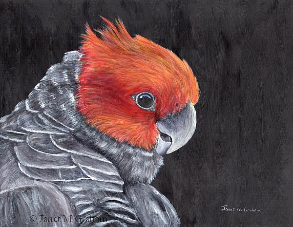 Art: Gang Gang Cockatoo by Artist Janet M Graham