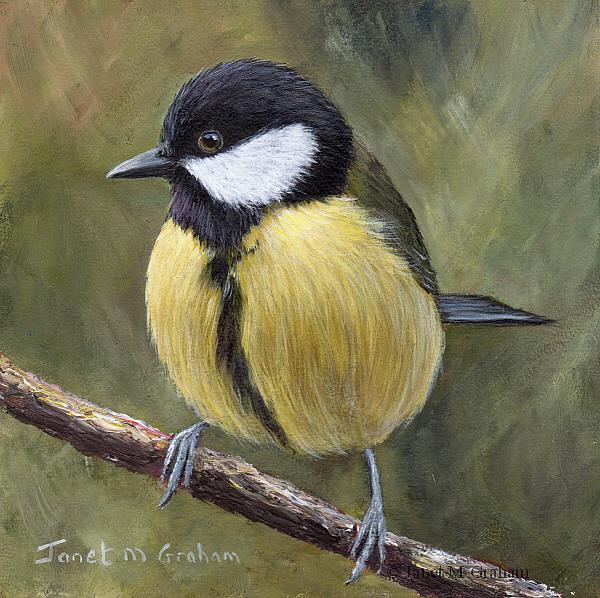 Art: Great Tit No 4 by Artist Janet M Graham