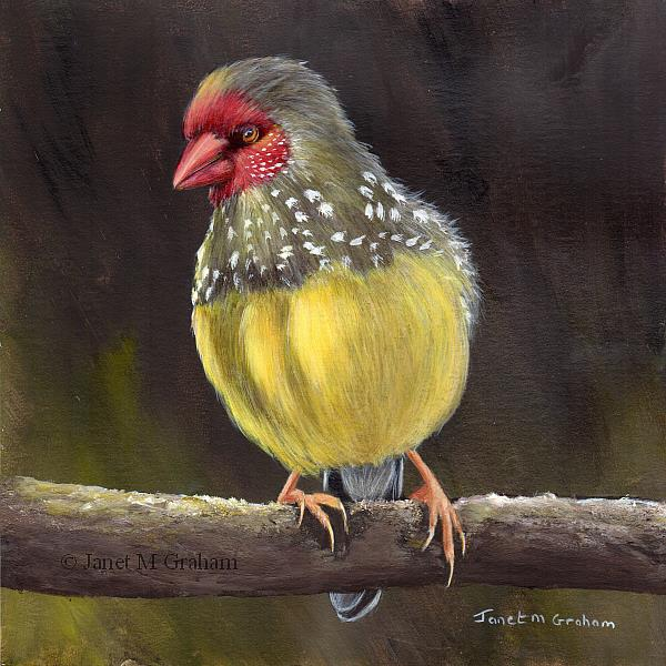 Art: Star Finch by Artist Janet M Graham