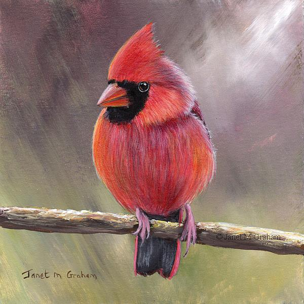 Art: Cardinal No 5 by Artist Janet M Graham