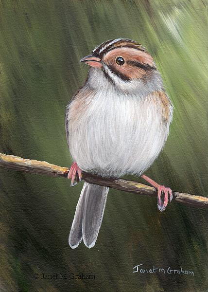 Art: Clay Coloured Sparrow No 3 by Artist Janet M Graham