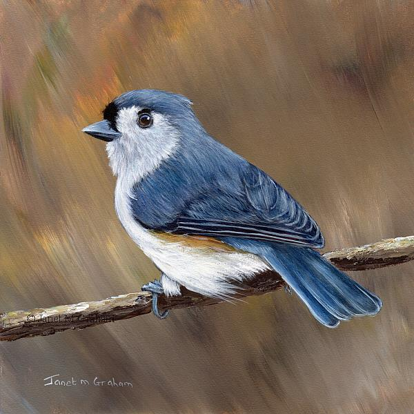 Art: Tufted Titmouse No 16 by Artist Janet M Graham