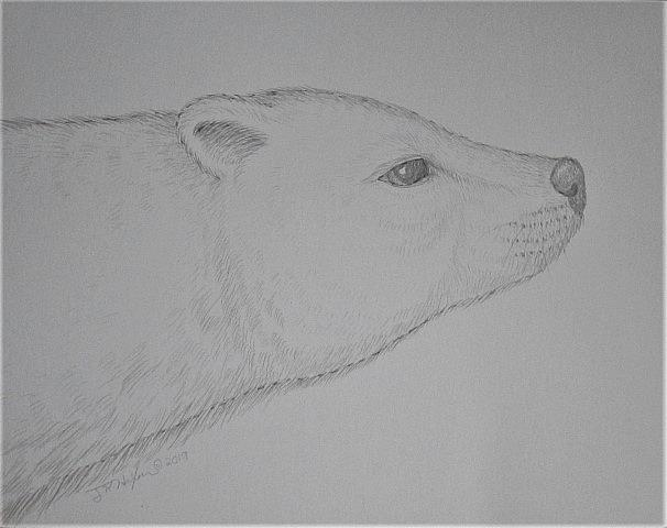 Art: Silver Ice Bear by Artist Jackie K. Hixon
