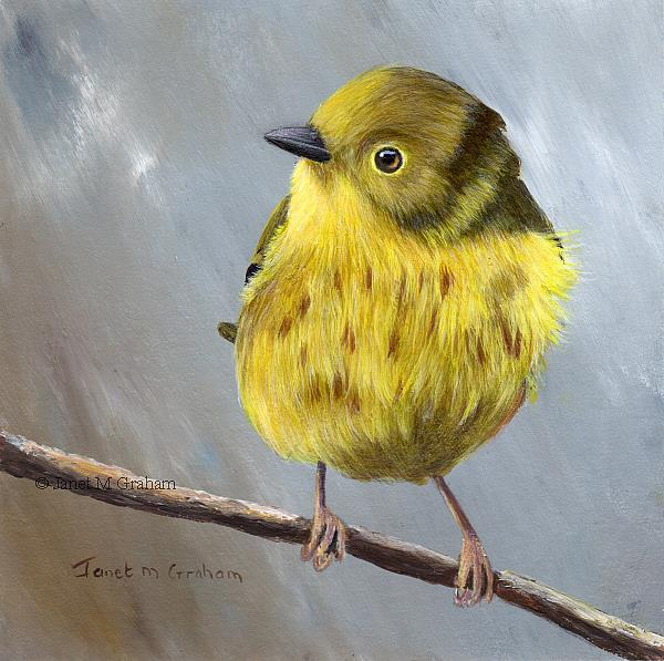 Art: Yellow Warbler No 4 by Artist Janet M Graham
