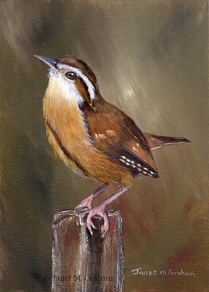 Art: Wren No 3 by Artist Janet M Graham