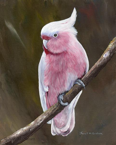 Art: Major Mitchell's Cockatoo by Artist Janet M Graham