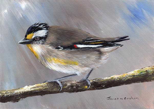 Art: Striated Pardalote No 5 by Artist Janet M Graham