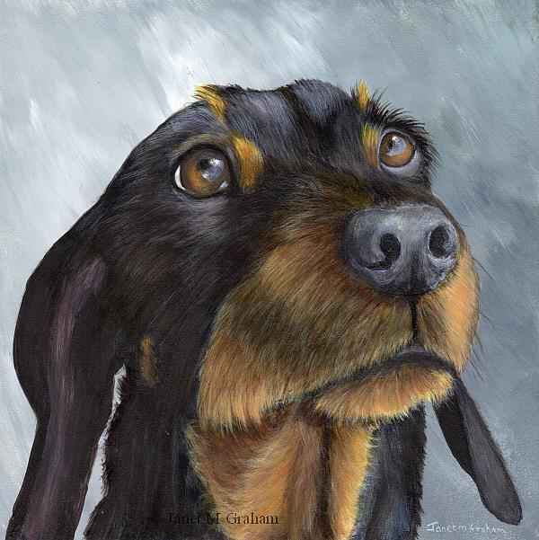 Art: Dachshund No 2 by Artist Janet M Graham