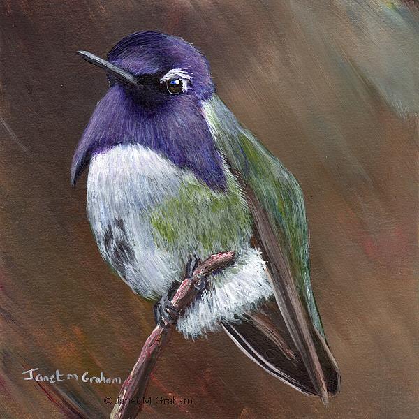 Art: Costa's Hummingbird by Artist Janet M Graham