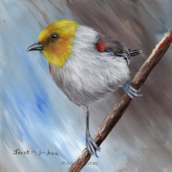 Art: Verdin by Artist Janet M Graham