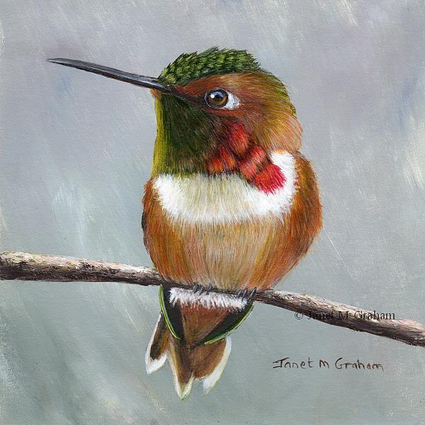 Art: Rufous Hummingbird by Artist Janet M Graham