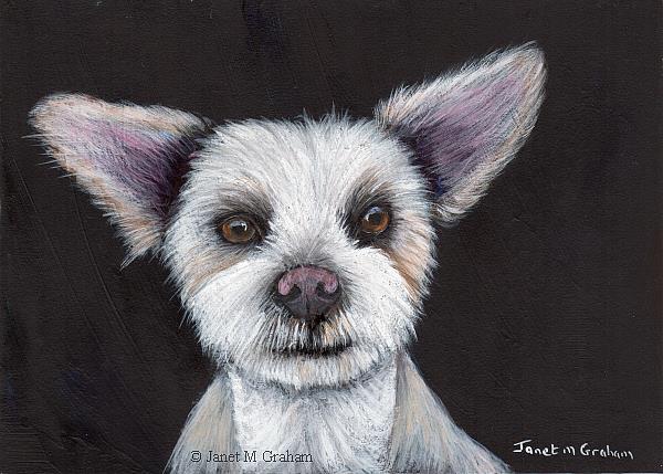 Art: Maltese Pup by Artist Janet M Graham