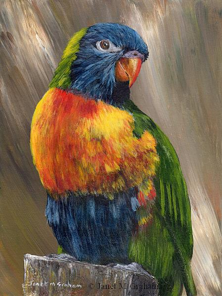 Art: Rainbow Lorikeet No 3 by Artist Janet M Graham