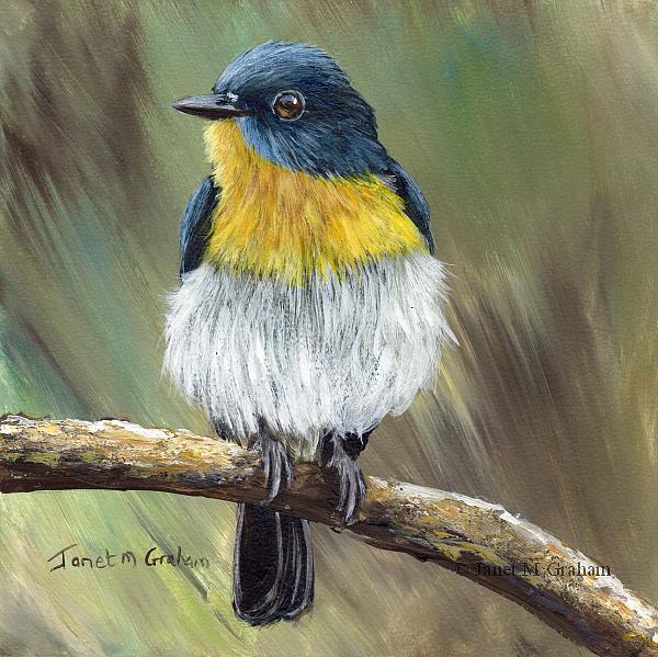 Art: Tickell's Blue Flycatcher by Artist Janet M Graham