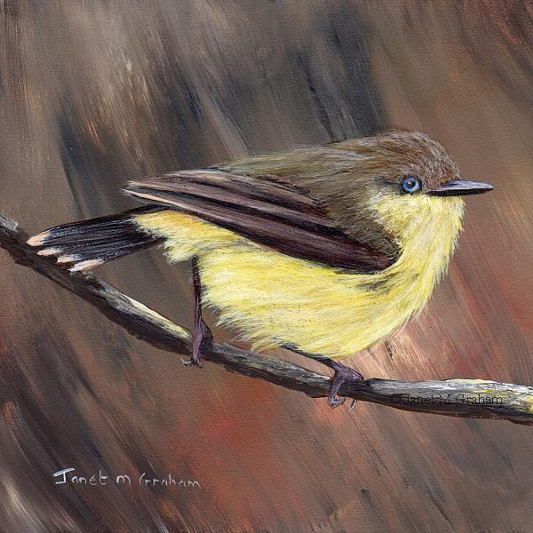 Art: Buff Rumped Thornbill by Artist Janet M Graham