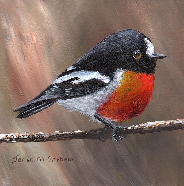 Art: Scarlet Robin No 11 by Artist Janet M Graham