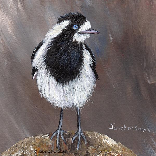 Art: Magpie Lark (Peewee) No 2 by Artist Janet M Graham