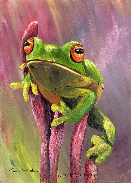 Art: Green Tree Frog by Artist Janet M Graham