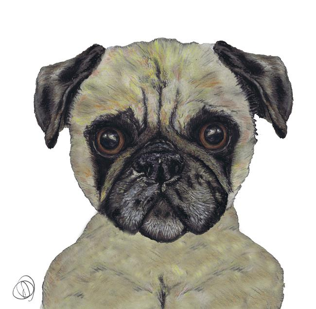 Art: PUG pug109 by Artist Dawn Barker