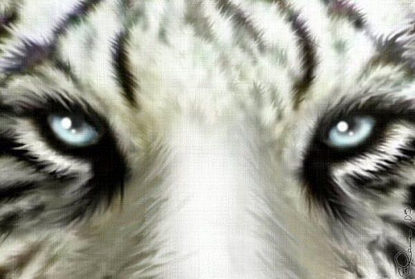 Art  White Tiger Eyes byWhite Tigers With Green Eyes