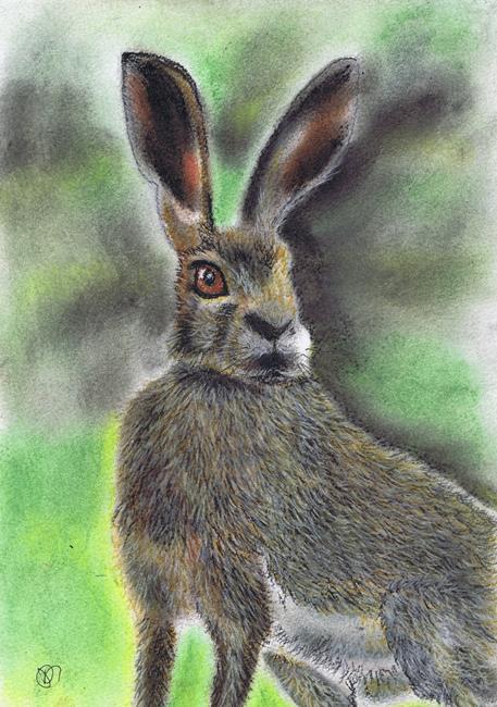 Art: BROWN HARE h2028 by Artist Dawn Barker