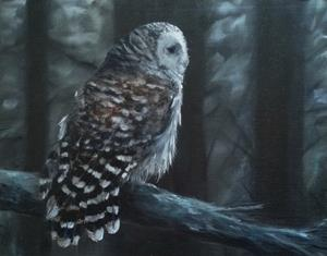 Detail Image for art Barred Owl