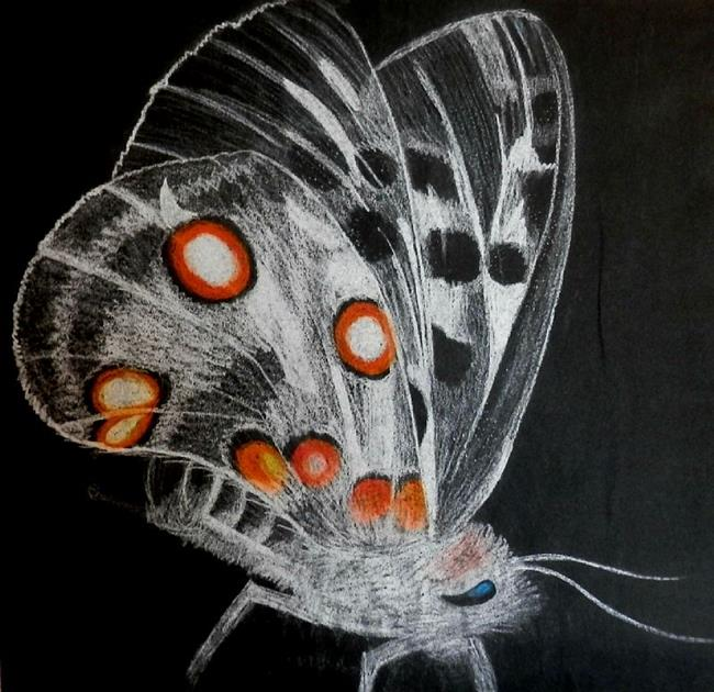 Art: moth by Artist Jane Gould